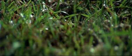 Blue_Velvet_opening_scene_bugs_grass.jpg